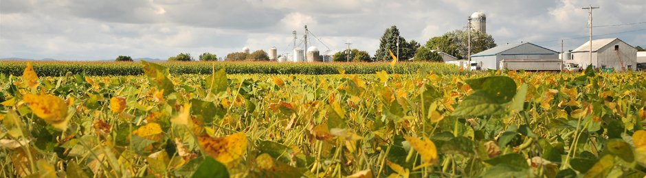 Agricultural Commodities Price Outlook Economic Forecast